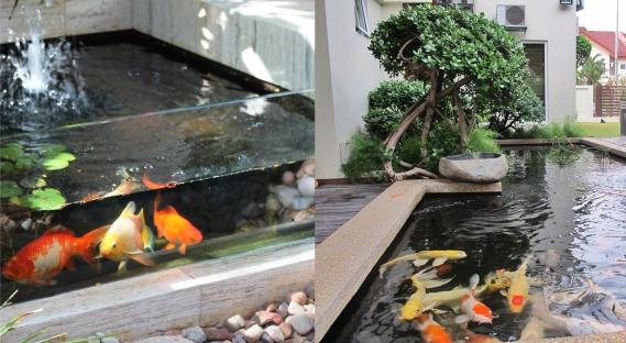 Desain Kolam Ikan Hias - Budidaya Ikan