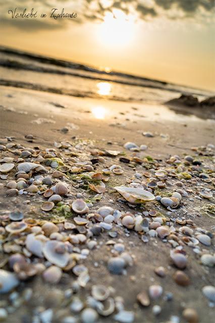Fotoprojekt 2in1 Photoday: Bildbearbeitung und Doppelbelichtung in PhotoScape mit Makroaufnahme Muscheln am Usedomer Strand
