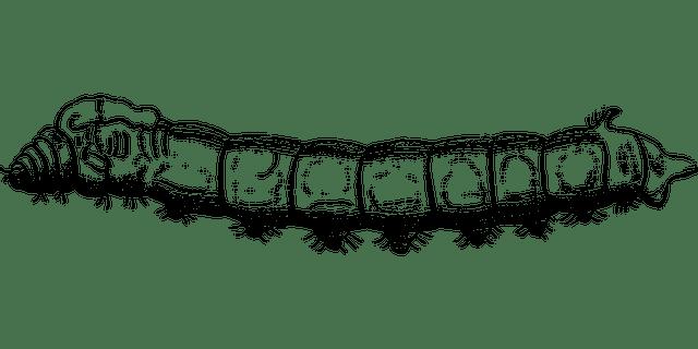 Cara Budidaya Cacing Sutra Sederhana Dan Mudah