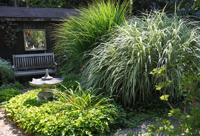 Three dogs in a garden favourite ornamental grasses part 1 for Different ornamental grasses