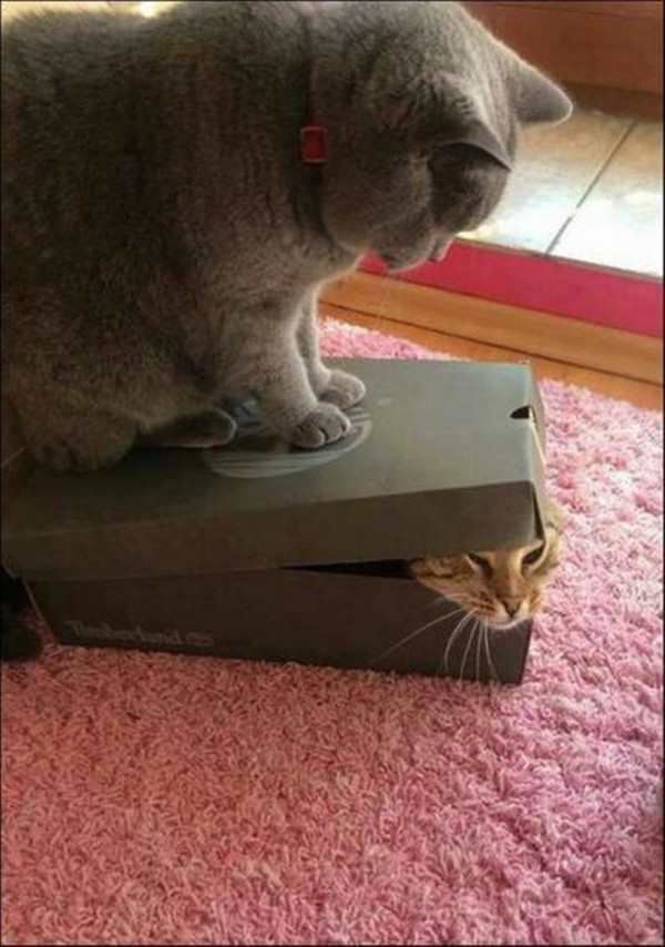 Funny cats - part 268, cute cat photo, best cute cat images