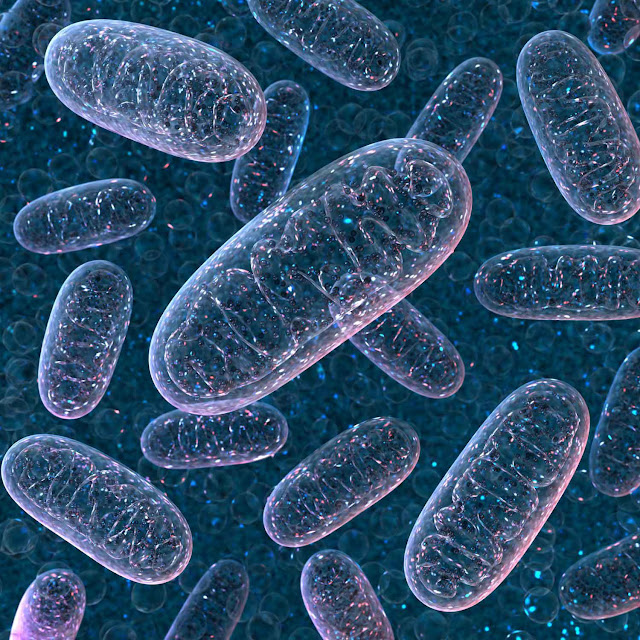 Study shows mitochondrial DNA can be passed through fathers – what does this mean for genetics?