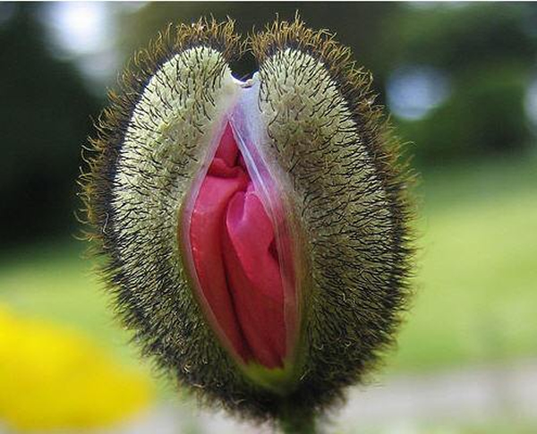 Picture of man with his head in a vagina
