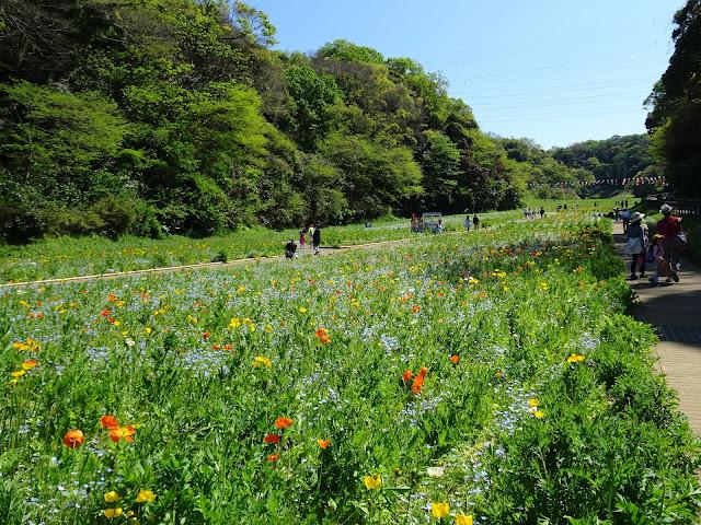 Kurihama Flower Park April