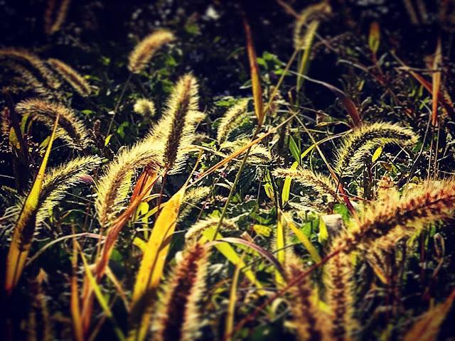 Stt gió mùa về - Các câu status gió lạnh đầu mùa rét mướt