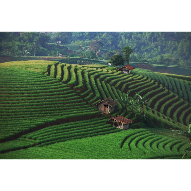 foto pemandangan sawah terasering bukit panyaweuyan majalengka