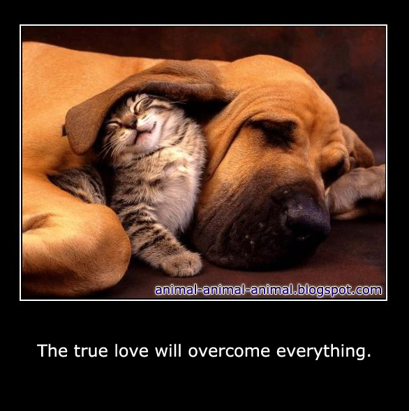 animal love meme - photo #3