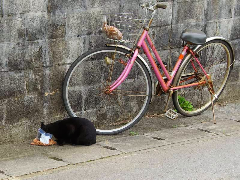 black cay and bicycle, cat has head in bag