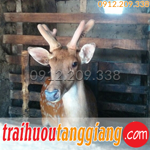 Trang trại hươu Tăng Giang