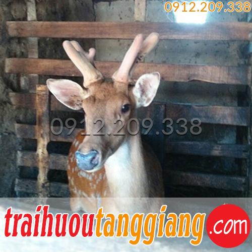 Trang trai hươu sao Tăng Giang
