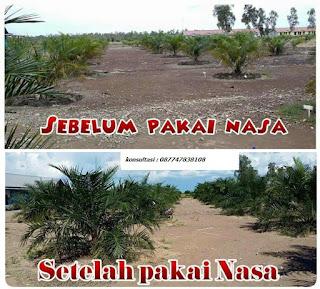 pupuk+organik+penyubur+tanaman+kelapa+sawit