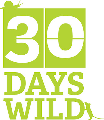#30dayswild blogger wildlife and nature blog
