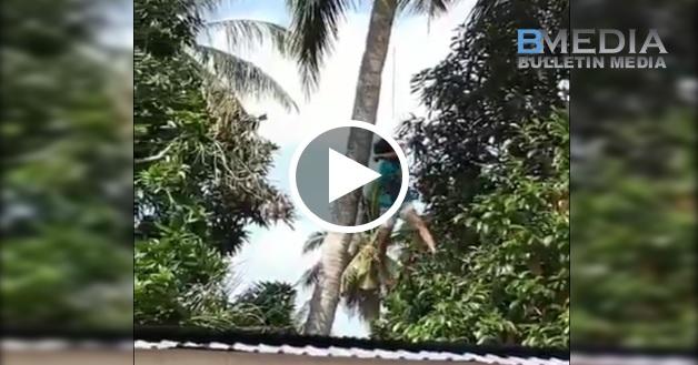 [VIDEO] Malang Tidak Berbau , Tali Terjerut Dileher Ketika Panjat Pokok Kelapa . Nasib Ada Orang Rakam , Kalau Tidak ...