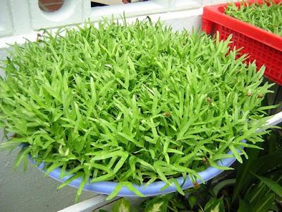 Cách trồng rau mầm tại nhà siêu tiết kiệm