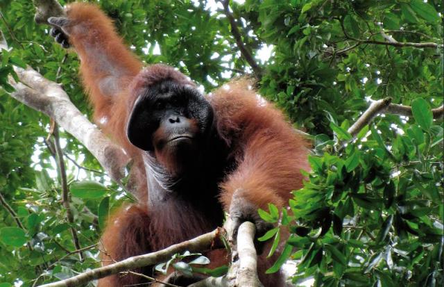 Foto : Hutan sebagai tempat tinggal spesies flora dan fauna