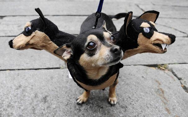 كلب أو جرو متنكر في عيد الهالوين بثلاث رؤوس بشكل مخيف ومضحك