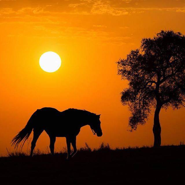 Download 50 Gambar Kuda Paling Jantan & Betina Untuk Wallpaper Handpone