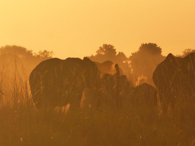 Elefantes en la isla Sedudu
