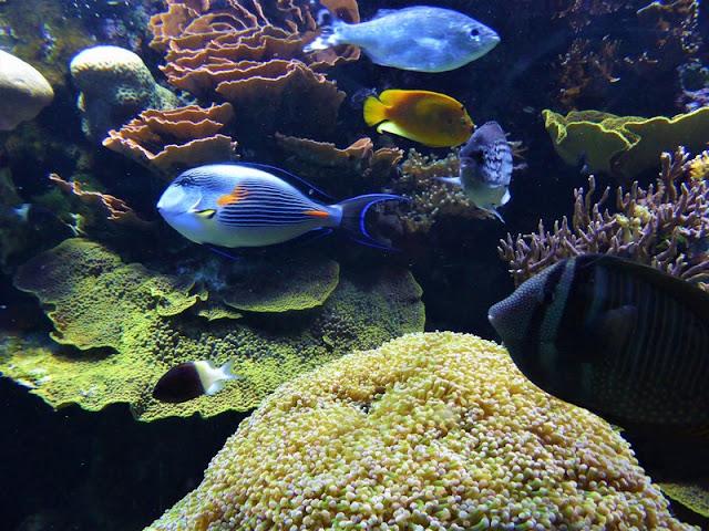 Museo Oceanográfico de Mónaco, peces tropicales