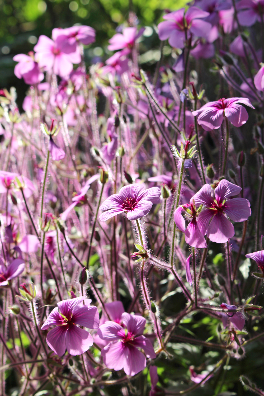 Berlin Botanical Garden - travel & lifestyle blog