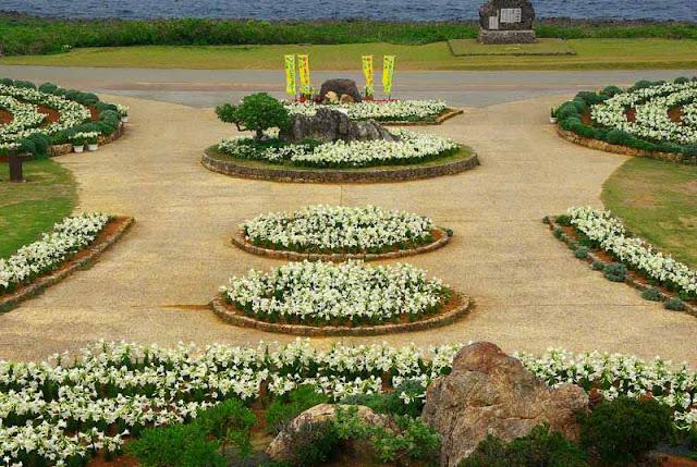 lily,flowers,Iejima