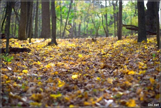 rừng lá những ngày cuối tháng 10