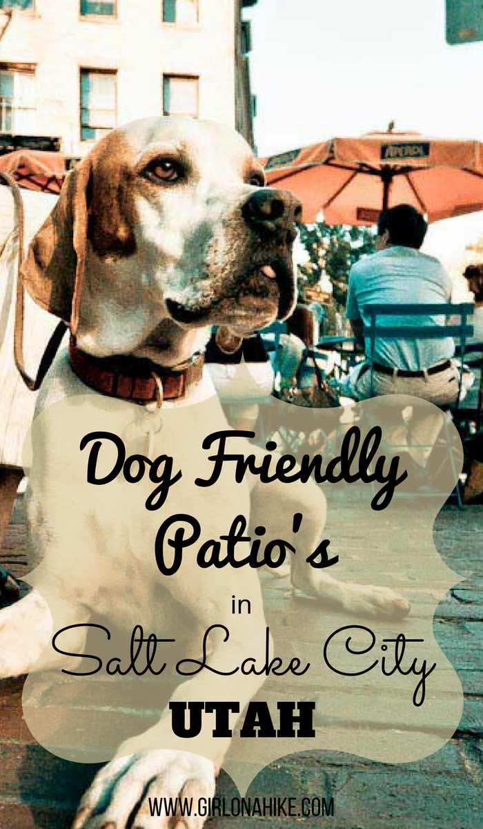 Outdoor Patio Dog Beds: Girl On A Hike: Dog Friendly Restaurant Patios In Salt