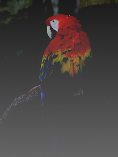 Macaw + Grayscale; Mode Difference; Opacity 50%