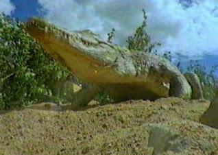 I coccodrilli sono rettili, il mondo animale per la scuola