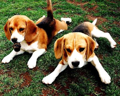 Instintos de los perros