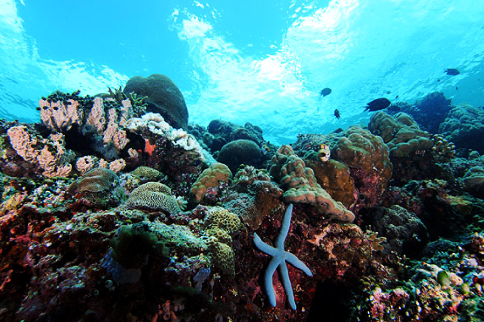 The beauty landscape of indonesia the best dive spots in for Oily fish representative species