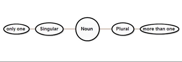 Singular and Plural Noun