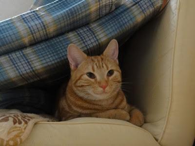 隙間から顔を出す猫をアップで撮影