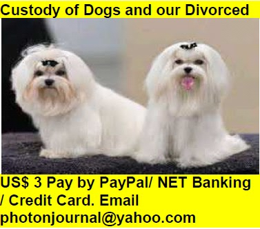 Custody of Dogs and our Divorced Book Store Buy Books Online Cash on Delivery Amazon Books eBay Book  Book Store Book Fair Book Exhibition Sell your Book Book Copyright Book Royalty Book ISBN Book Barcode How to Self Book