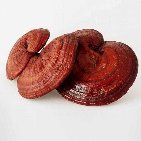 nấm linh chi đỏ