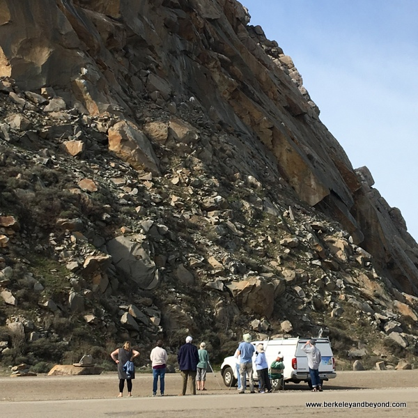 viewing a Peregrine falcon nest at Morro Rock in Morro Bay, California