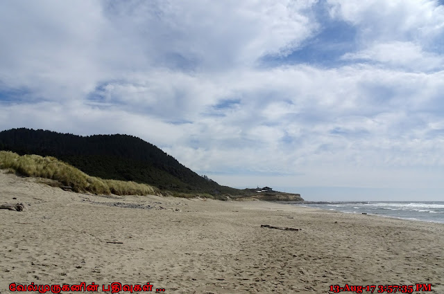 Oregon Stone field Beach