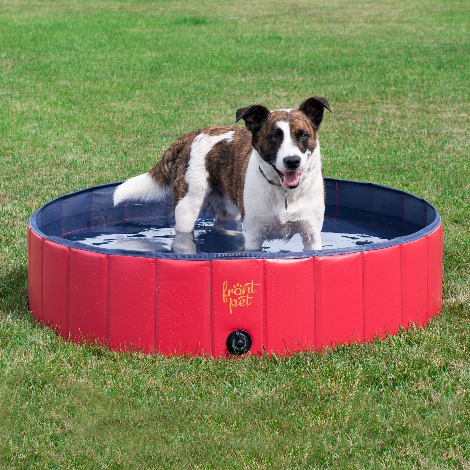 Dog Wading Pool | How to Keep a Dog Cool in the Summer (www.danslelakehouse.com)
