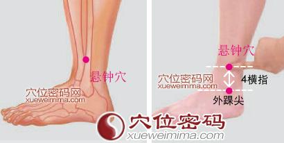 懸鐘穴位 | 懸鐘穴痛位置 - 穴道按摩經絡圖解 | Source:xueweitu.iiyun.com