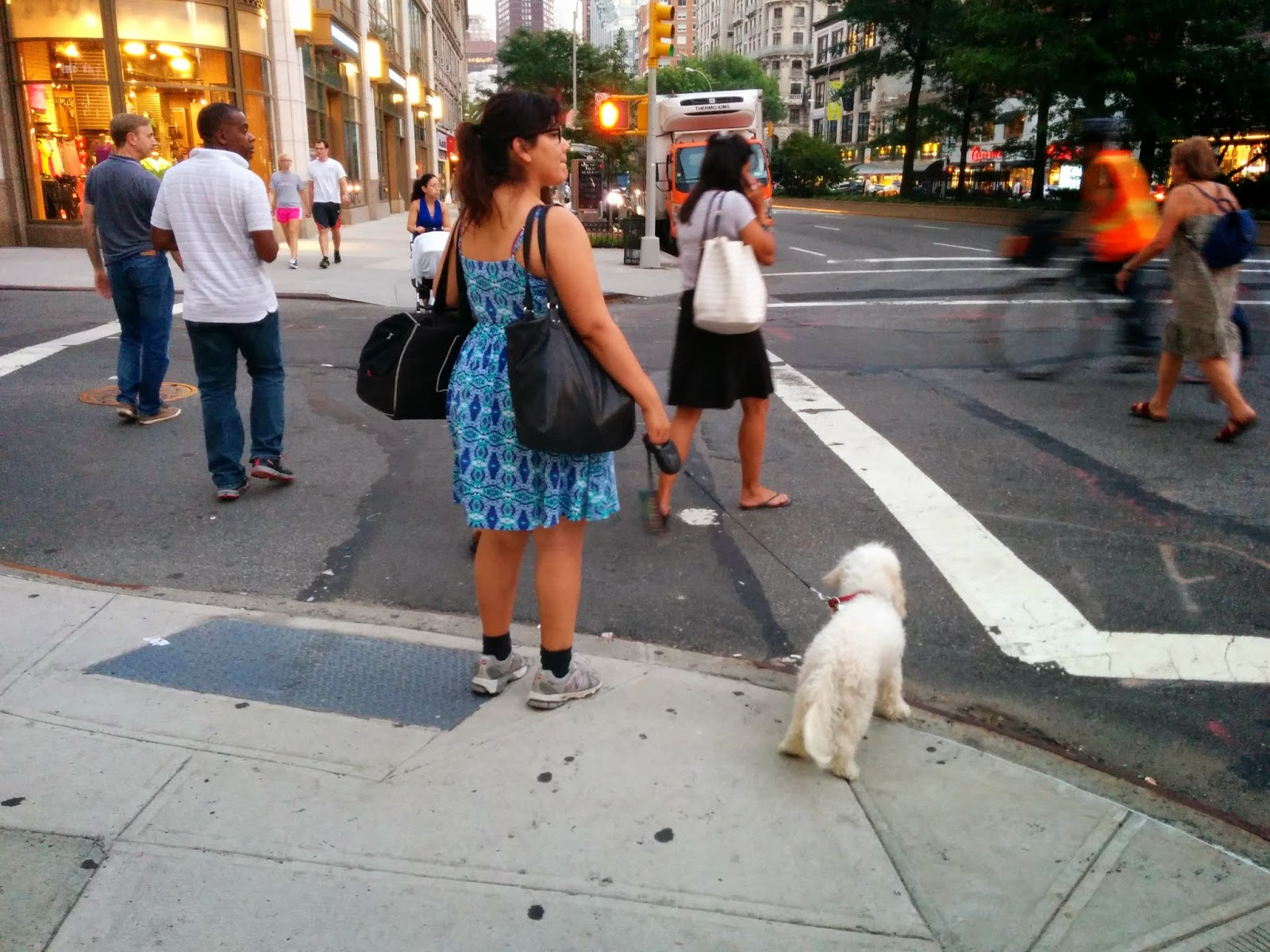 New York City is surprisingly dog friendly!  There are so many dogs and dog lovers in the Big Apple.  Dogs, Pet friendly travel
