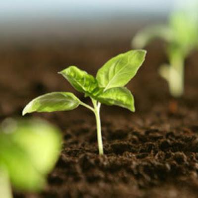 Planta-vida