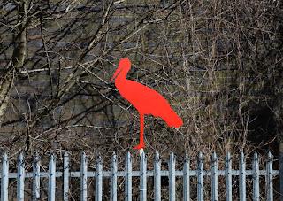 Stork Red Stork Migrant Stork Gavin Rogers