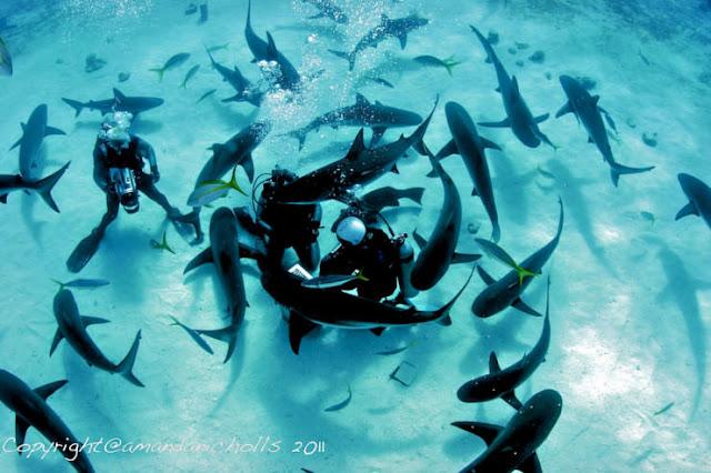 Menyelam di Bahama