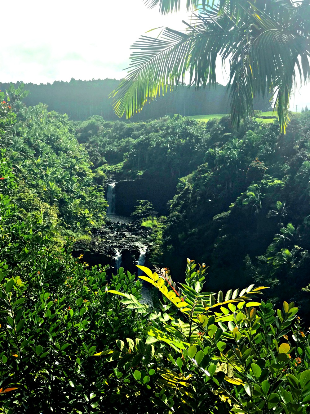 zipline tour on the big island