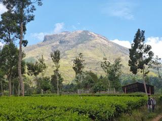 Paket Wisata Pendakian Gunung Sindoro Jalur Pendakian Kledung, Sigedang, Tambi, Alang Alang Sewu Ekonomis, Murah, Hemat, VIP dan VVIP