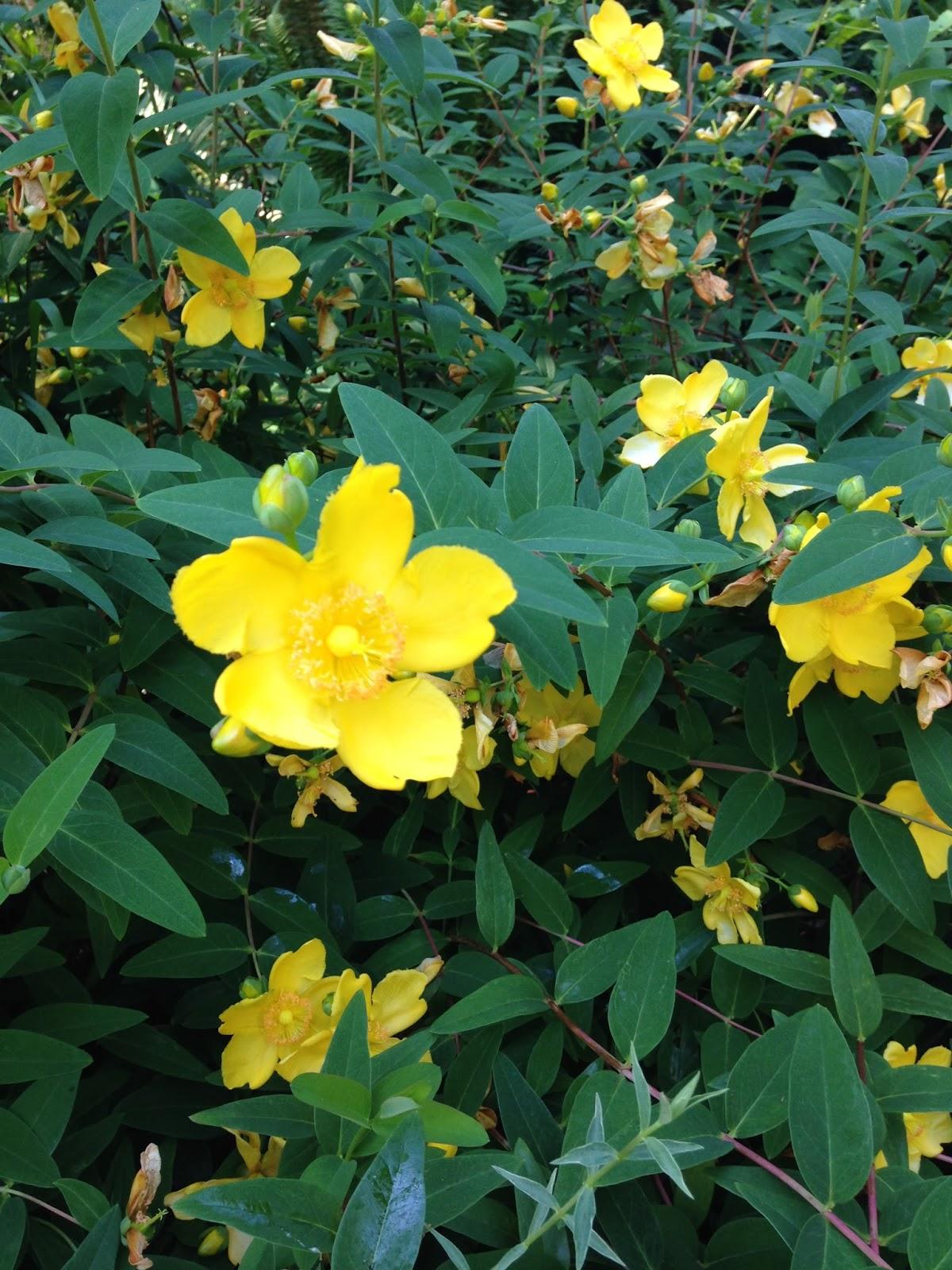 aerin u0026 39 s cranberry blog  flowers in british columbia