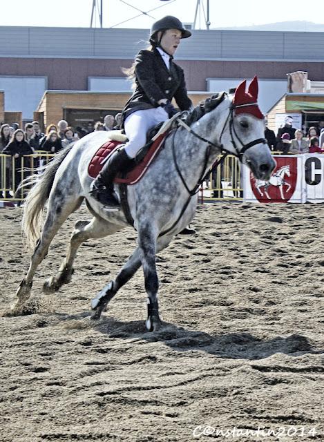 Iași - Festivalul Calului