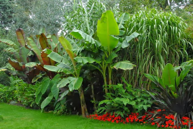 Cold hardy tropical effect border with hardy bananas