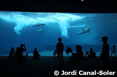 Delfines en el Acuario de Génova