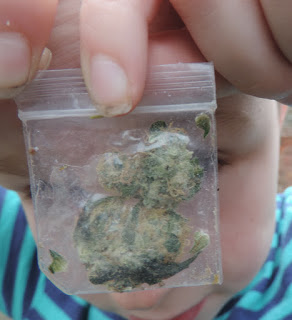 baggy of weed grass cannabis